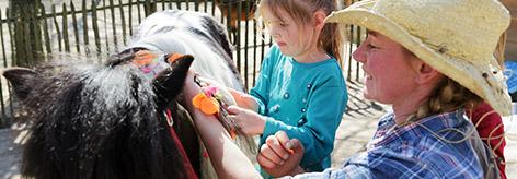 Pony-Ferienhaus