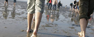 Academy: Walk in the Wadden Sea (UNESCO World Heritage)