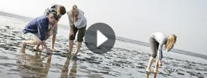 Video Park Nordseeküste