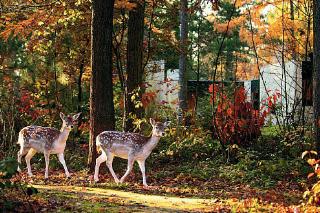 Bungalow in de herfstsferen