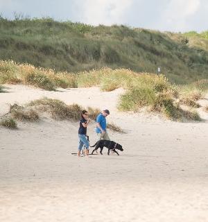 niederländische Nordsee mit Hund