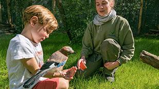 Activité animalière au Bois aux Daims