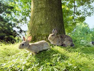 image Vacances de Pâques