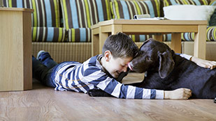 Mit Hund im Ferienhaus in Deutschland