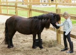 Pony Urlaub