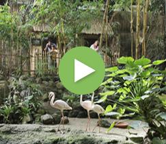 Junglecabana